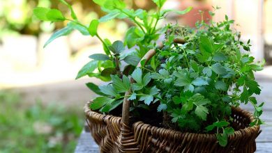 Photo of 10 Healthy Herbs With Unlimited Benefits
